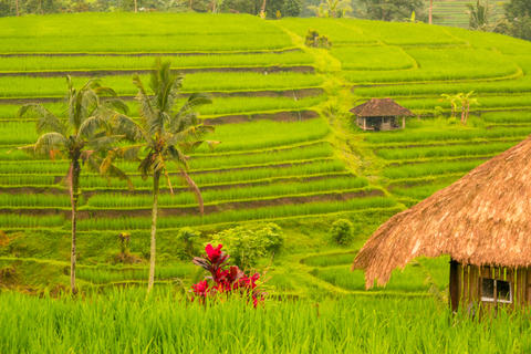 Huts, Palms and Flowers on the Terraces of Rice Fields Photo