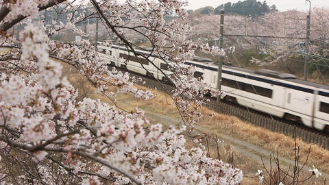 Cherry blossom passing through the express train Archivo