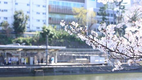Sakura and railway home 영상물