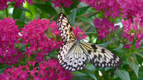 Butterfly and Tropical Flower Footage
