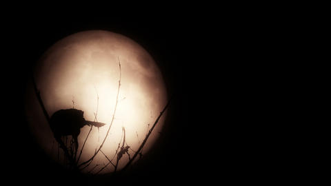 Bird silhouetted against a bright full moon Footage