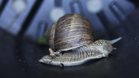 Macro Side View of Garden Snail 영상물