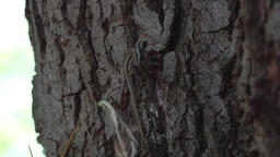 Lizzard on a tree trunk Footage