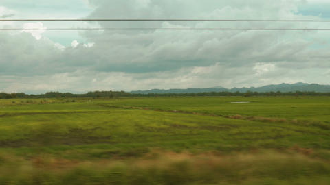 Panning shot of a rice field in Costa Rica Footage