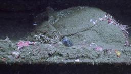 Fish hides in a seabed underwater in ocean of wildlife Philippines Footage