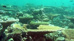 Amazing underwater life of marine life in sea of Maldives Footage