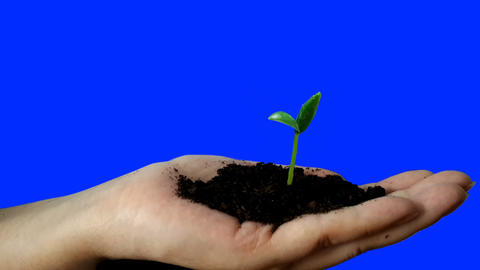 Close-up of a seedling emerges from the earth on his hand. Time Lapse Footage