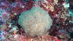 Unique beautiful world of colorful beautiful seascape underwater Maldives Footage