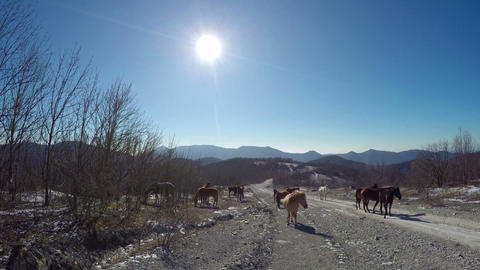 Horses on mountain road 영상물