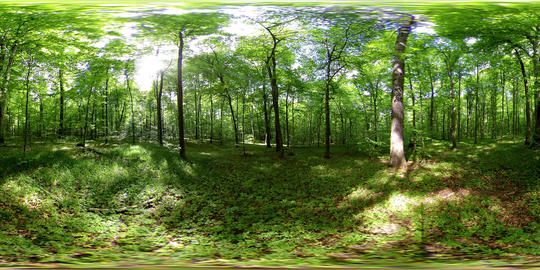 360 vr forest timelapse panoramic 4k GIF