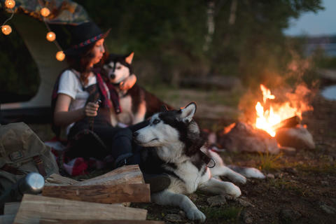 Woman with dogs on nature Photo