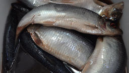 Top close-up zoom in view of salted pacific herring fish Footage