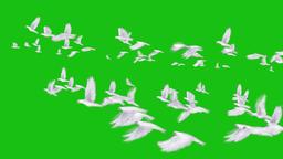 Birds & Animal PAck 1