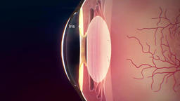 Biology of the Eyes 2 Footage