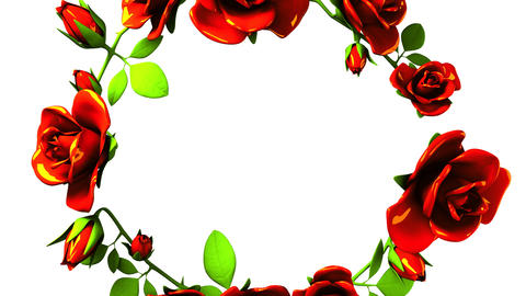 Red roses frame on white text space Animation
