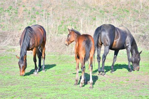 Horses at the farm フォト