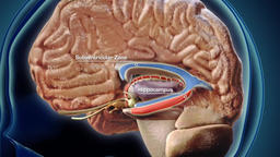 Development of nerve tissue Footage