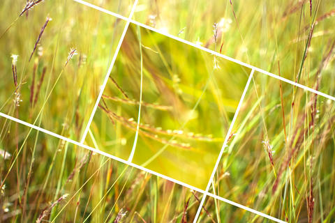 Geometric grass abstract background with triangles and lines Photo
