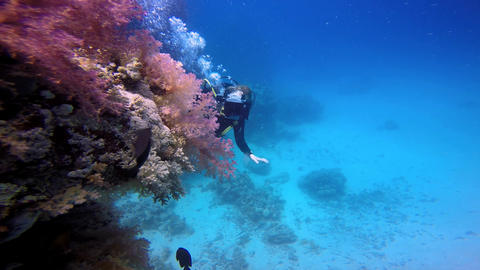 Underwater videographer, filming the colorful coral reef Live Action