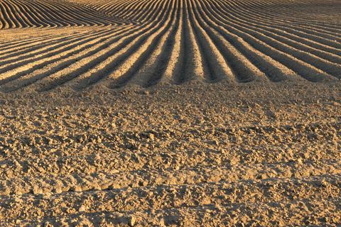 Field at sunset フォト