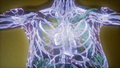 science anatomy scan of woman heart and blood vessels glowing ภาพวิดีโอ