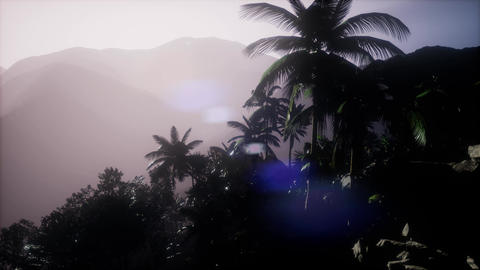 4k Aerial view of beautiful palm trees and mountains Footage