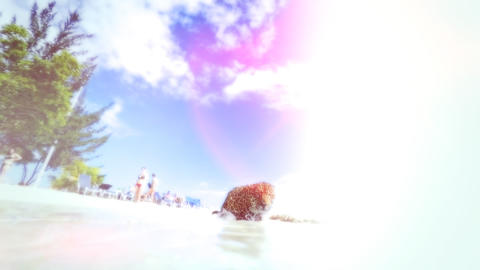 Jaguar as it roams on a beach ビデオ