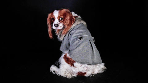 Cute dog coat winter hoodie clothes pet wear costume Footage