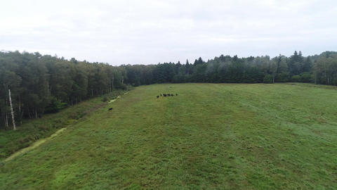aerial, flying over the forest glade Live Action