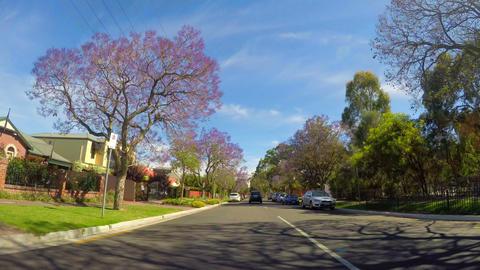 Jacaranda purple flowering tree lined streets of springtime Adelaide, South Footage