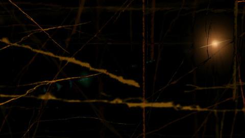 Spooky Night in the Dark Woods Stock Video Footage
