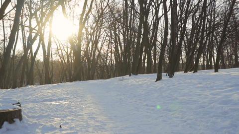 Fluffy Samoyed Dog In Winter Park 2