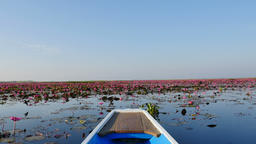 Boat trip at pink lotus lake, Udon Thani Province, Thailand Live Action