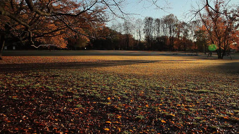 Morning Sunshine / Autumn Leaves / Park - Pan/Fix Live Action