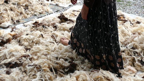 a woman cleans the sheep's wool,cleaned sheep wools will be pillows and Live Action