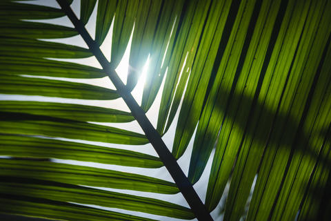 Sunlight Through Leaf In Forest Flare Rays Nature Green Healthy Photo