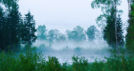 Time lapse of fog rising from a forest pond Footage