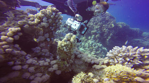 Underwater videographer plays hide and seek with the arothron fish Footage