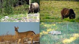 Animals And Nature 0