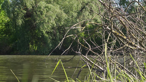 Dry tree in the river Footage