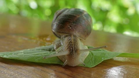 Snail Crawling Outdoors At Spring GIF