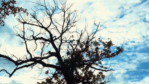 Tree And Clouds Time Lapse ภาพวิดีโอ