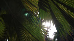 Sunset in asian park. Sun shining through green leaves of palm trees. Gentle Footage