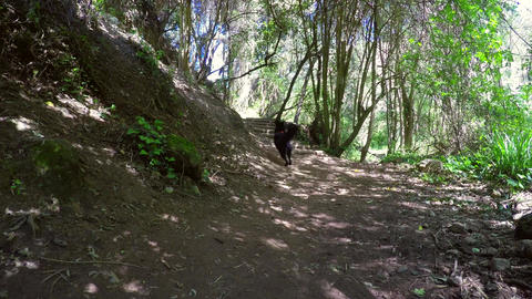 Happy Dog And Adult Couple Hiking in a Forest Stock Video Footage