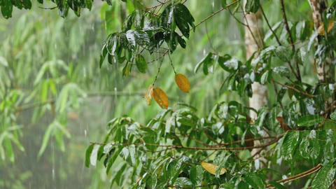 Heavy tropical rain in jungle Footage