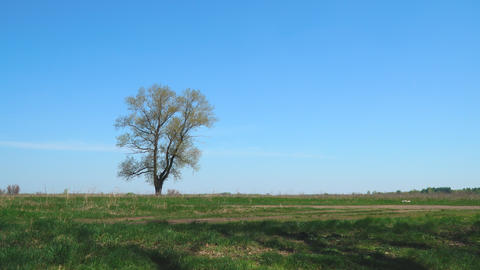 Lonely tree against a background of green grass and blue sky Footage