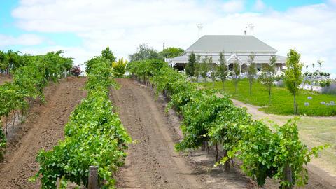 House and vineyard of Kincora Vineyard estate, handheld Archivo