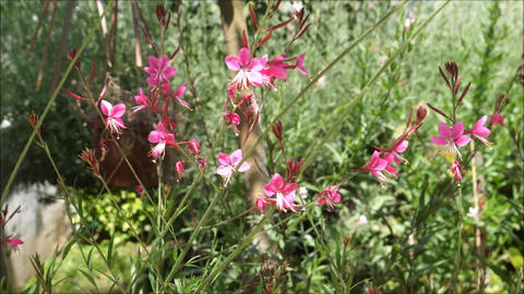 Pink wild flowers shivering in the breeze in woods Live Action