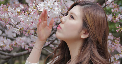 Attractive Japanese girl wearing white smells cherry blossoms sakura close up Footage