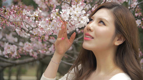 Beautiful Japanese young women smells cherry blossoms in park Slow motion- ライブ動画